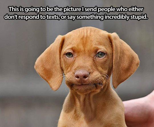 Humortrain Funny Animals Funny Dogs Cute Animals