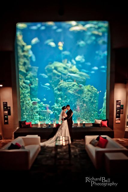 Charleston Aquarium Wedding 3 Travel Journeys Destination Weddings Honeymoons Www