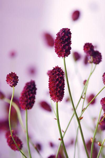 Prosze O Pomoc Co To Za Kwiaty Plants Red Peppercorn Beautiful