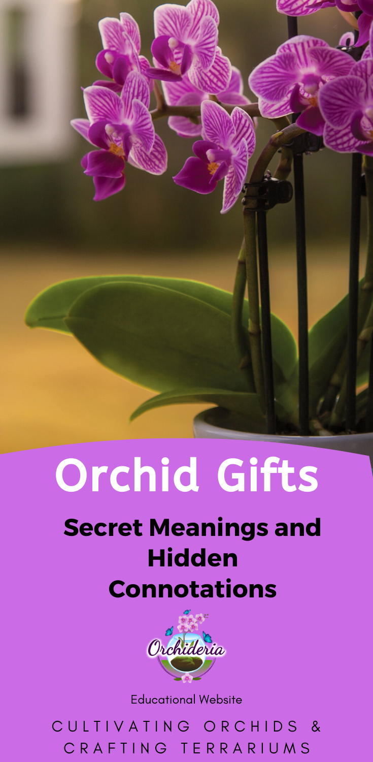 Orchid Gifts Secret Meanings And Hidden Connotations In 2020 Orchids Orchid Meaning Indoor Orchids