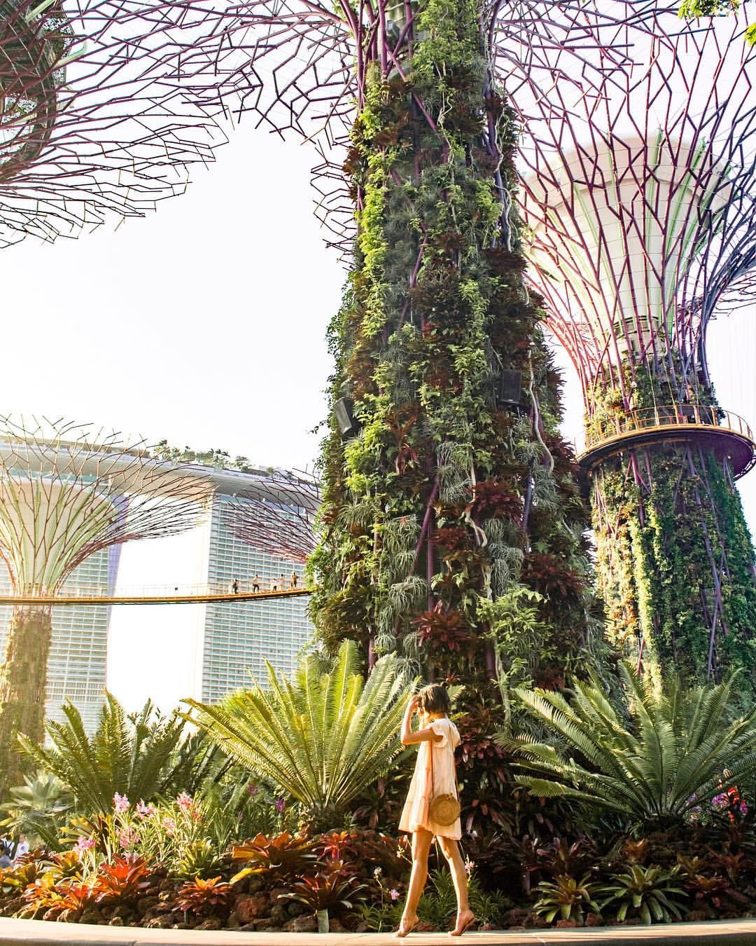 ddc505684a9c9b66b56994151ef7dc81 - Best Time To Go To Gardens By The Bay