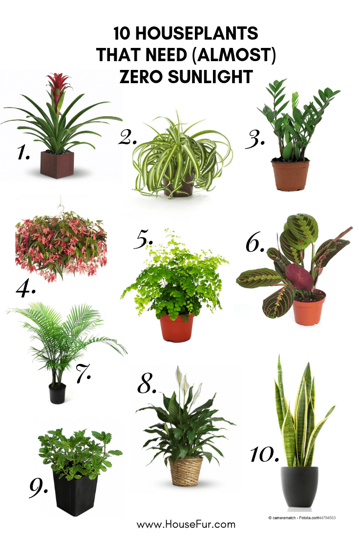 10 Houseplants That Need Almost Zero Sunlight House Fur Plants House Plants Indoor Low Light House Plants