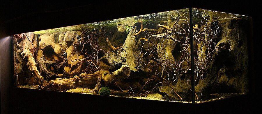 Amazon Biotope Aquarium | Diyenler: Supreme , tugix ...