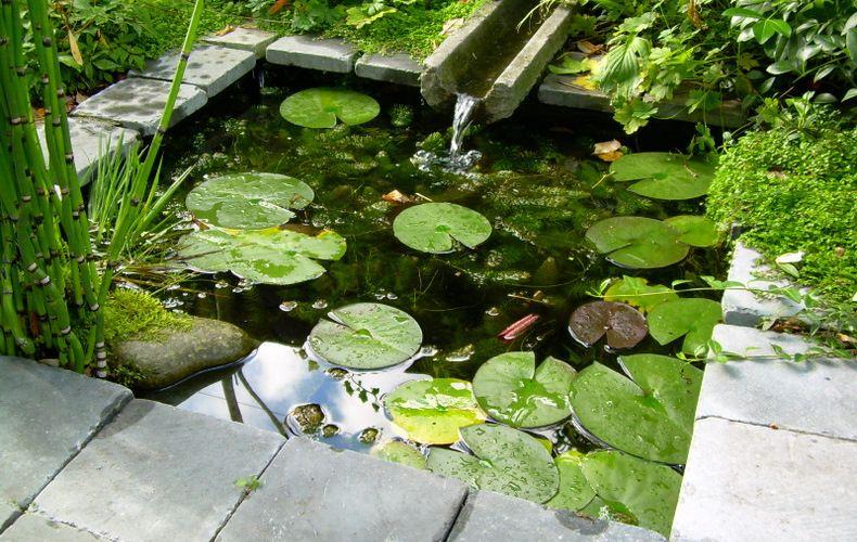 Idee kleine vijver tuin vijver tuin en natuurlijke tuin for Kleine vijver tuin