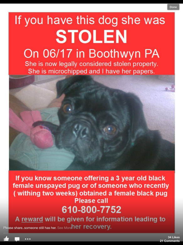 Black Pug Missing Since June 2013 From Boothwyn Pa Plz Rt