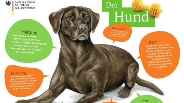 Tierfibel Poster Hund Schulhund Hunde Heimtiere