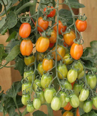 Flower Seeds Annual & Perennial Flowers Vegetable
