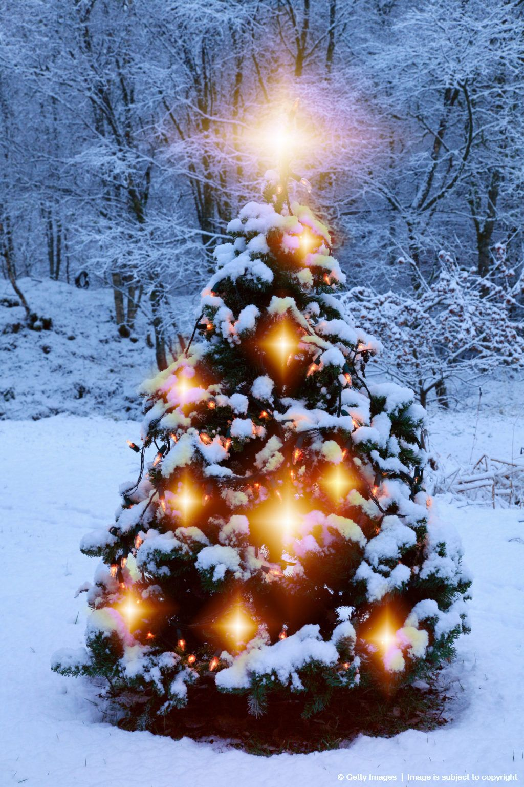 christmas tree outside in the snow christmas trees and. Black Bedroom Furniture Sets. Home Design Ideas