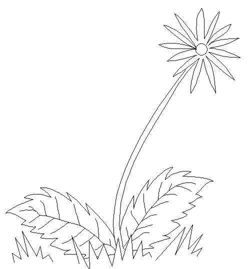 Dandelion One Of Natures Flowers Free Printable Coloring And Activity Pages Click For More Fun Pages F Flower Coloring Pages Flowers Free Printable Coloring