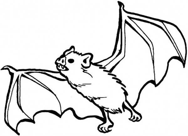 Bats Bats Sharp Teeth Coloring Page Bat Coloring Pages Animal Coloring Pages Coloring Pages