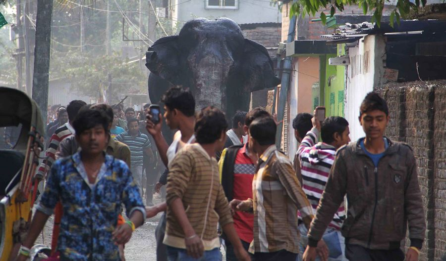 A Wild Elephant Runs Loose in an Indian City - The Atlantic