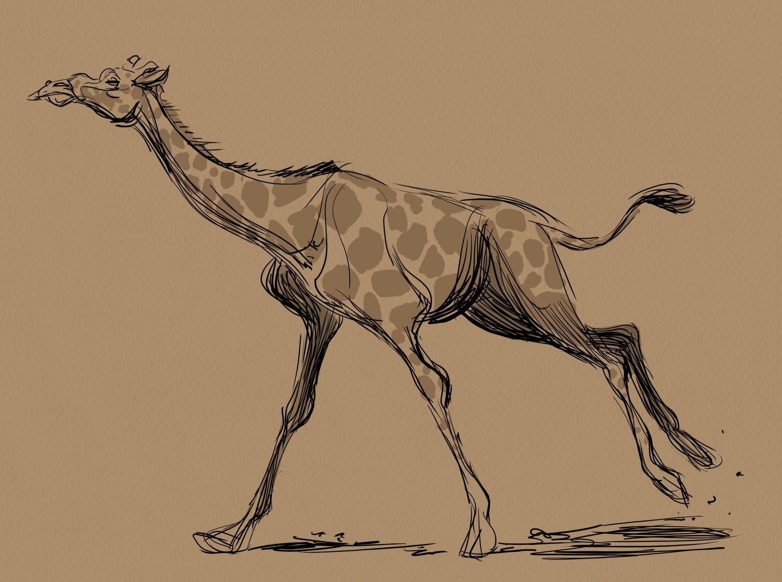 drawing giraffes giraffe profile drawing some giraffe sketches