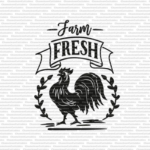 Farm Fresh Rooster Svg Chicken Chick Country Life File Vector Clip Art Silhouette Cameo Cricut Cutting Sign Rustic Design