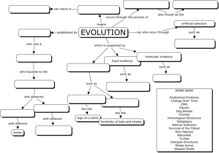 evolution concept map great evoltuion worksheet bio class pinterest evolution. Black Bedroom Furniture Sets. Home Design Ideas