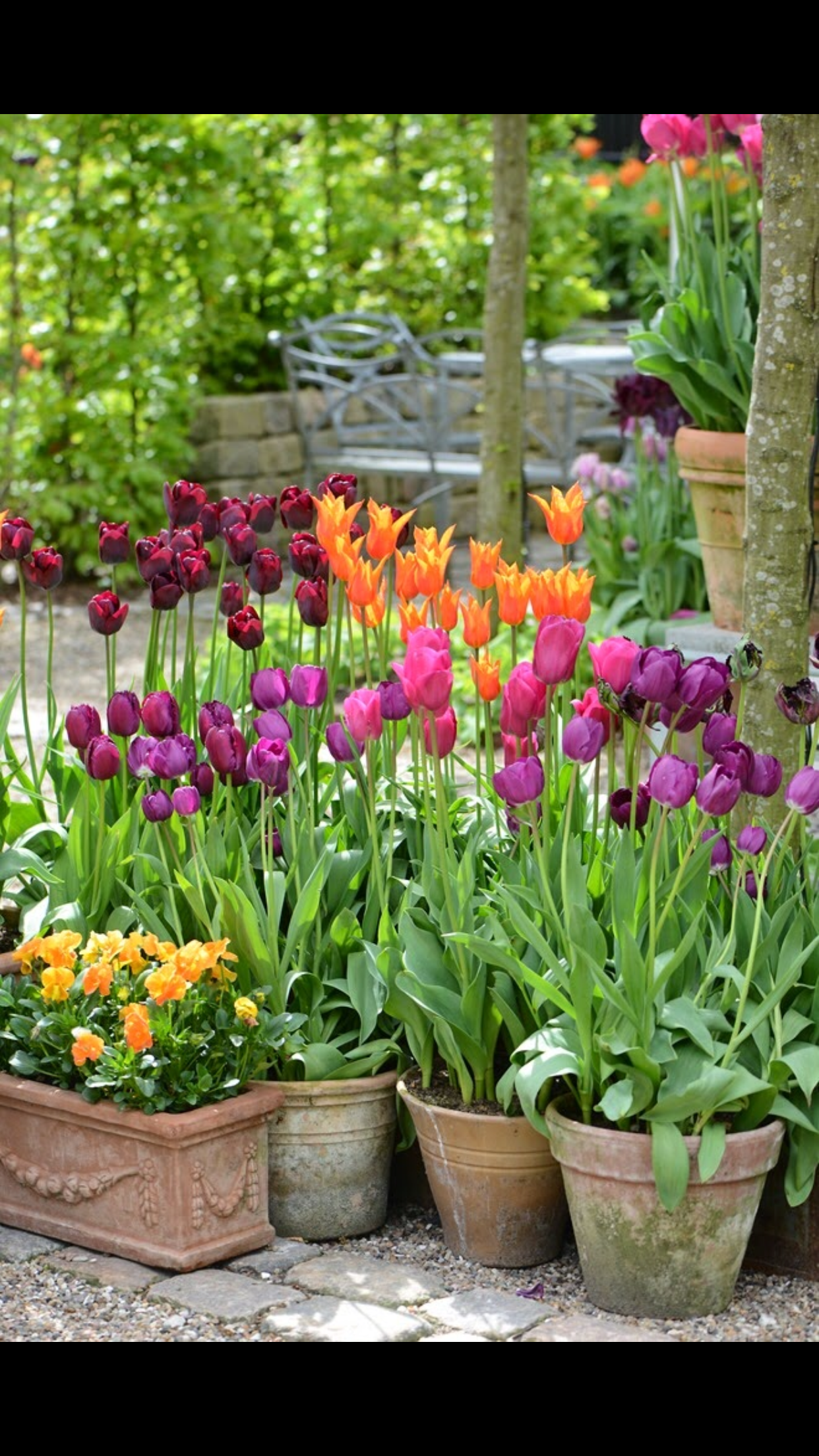 Collection Of Tulips Container Gardening Flowers Garden Containers Container Flowers