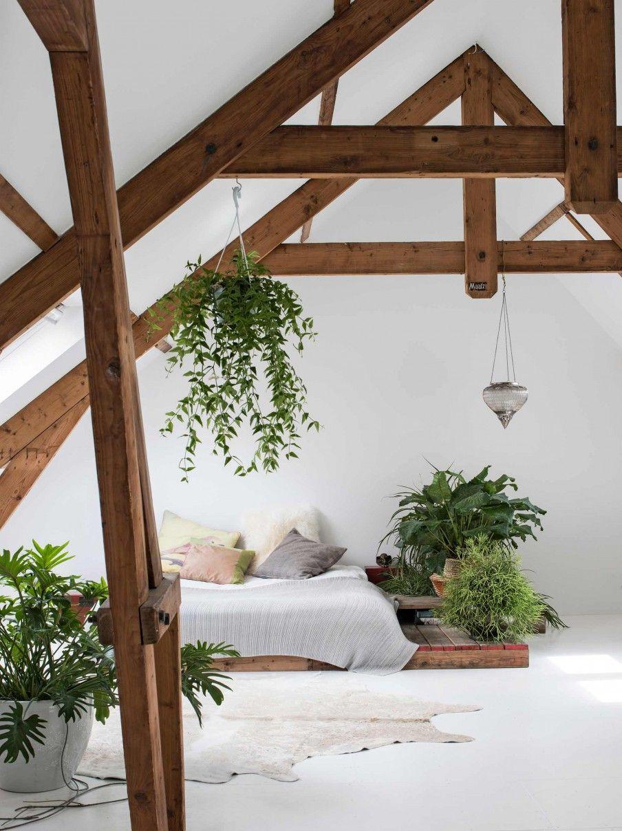 12 houten balken mon cocon bedroom pinterest - Puceron blanc plante verte ...
