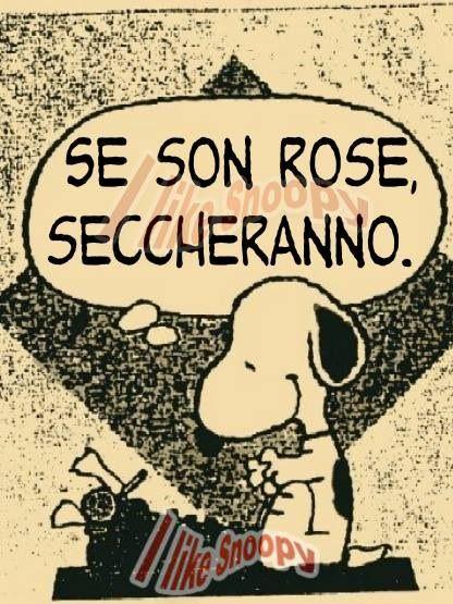 Rose Ottimismo Fiorisecchi Aforismi Frasi Pillole Sesonrose Puntidivista Immagini Citazioni Divertenti Vignetta Citazioni Snoopy