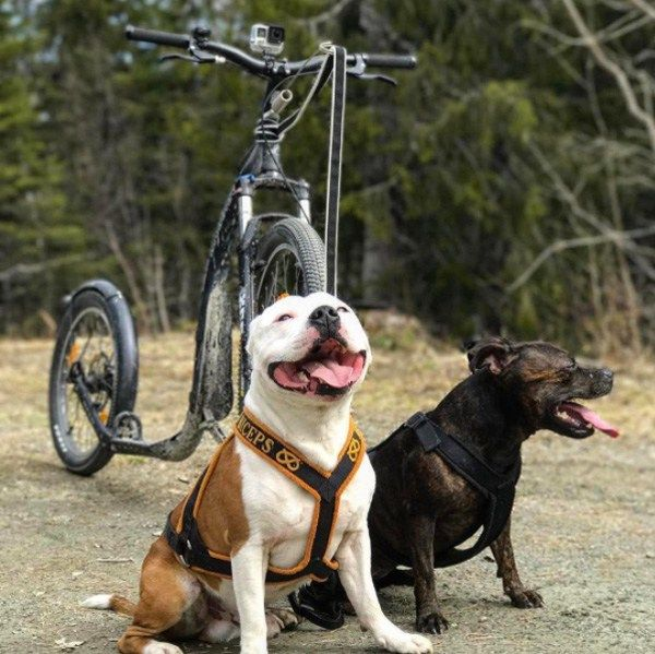 Kickbike: America's Leading Urban & Dryland Mushing Dog