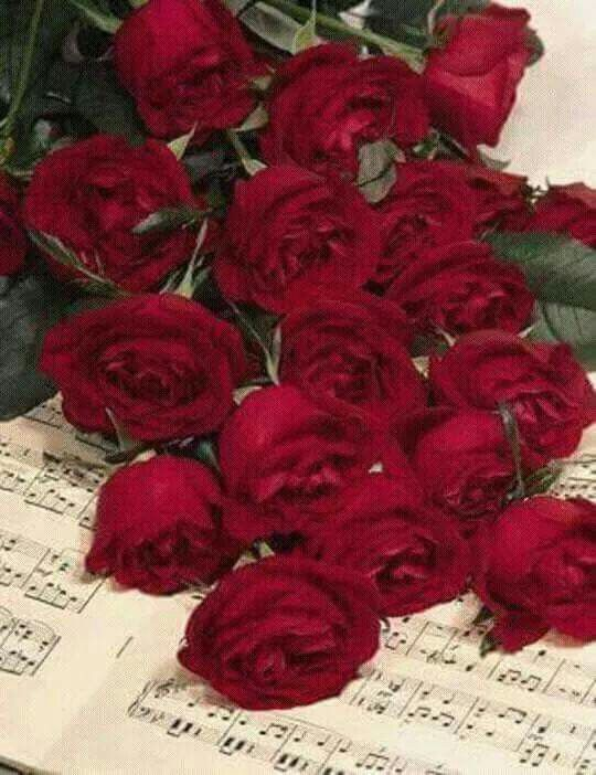 Pin Oleh Maria P Di Beautiful Flower Mawar Cantik Bunga Mawar