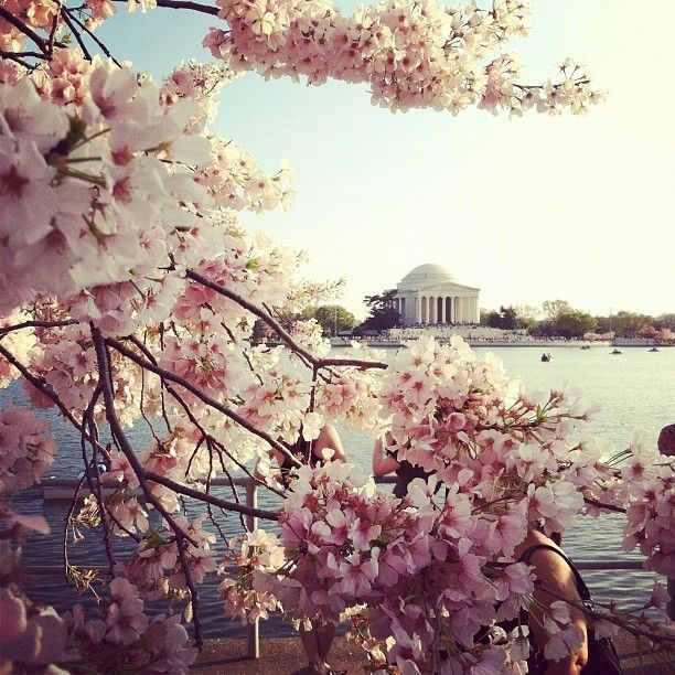 First Signs Of Spring Cherry Blossom Festival Washington D C By Nc2777a Mashpics Cherry Blossom Festival Photo Challenge Spring Sign