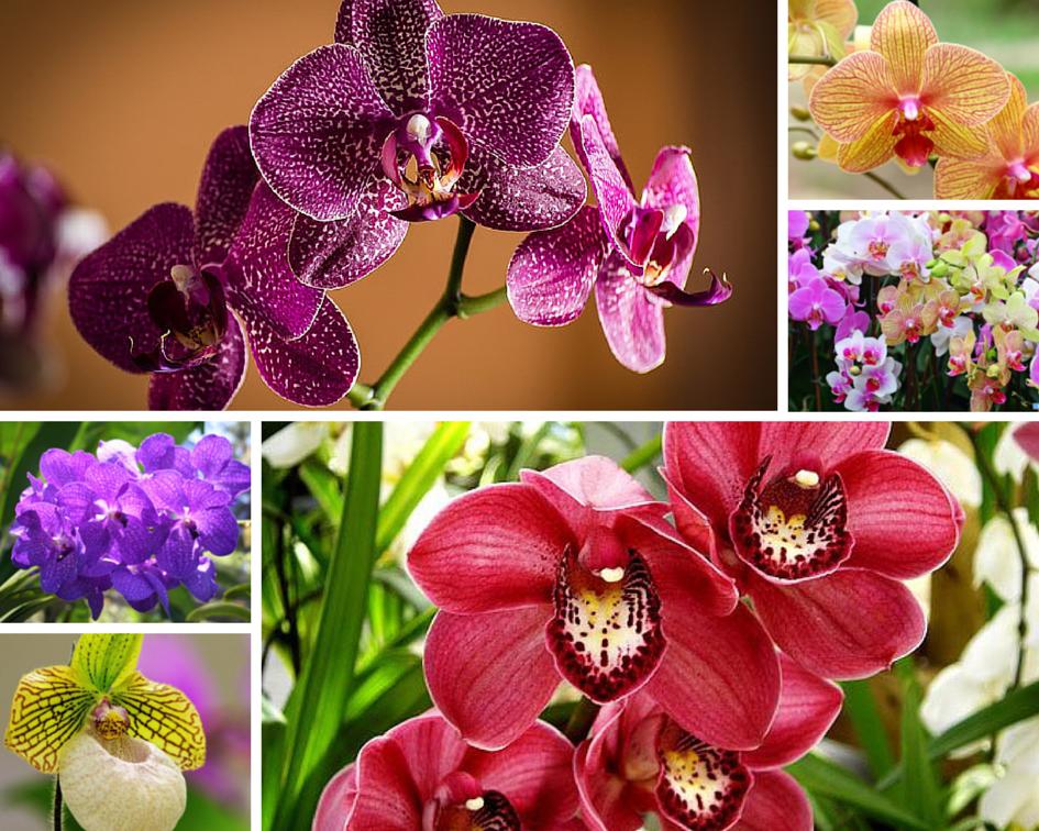 5 красивейших комнатных растений, которые цветут зимой ...