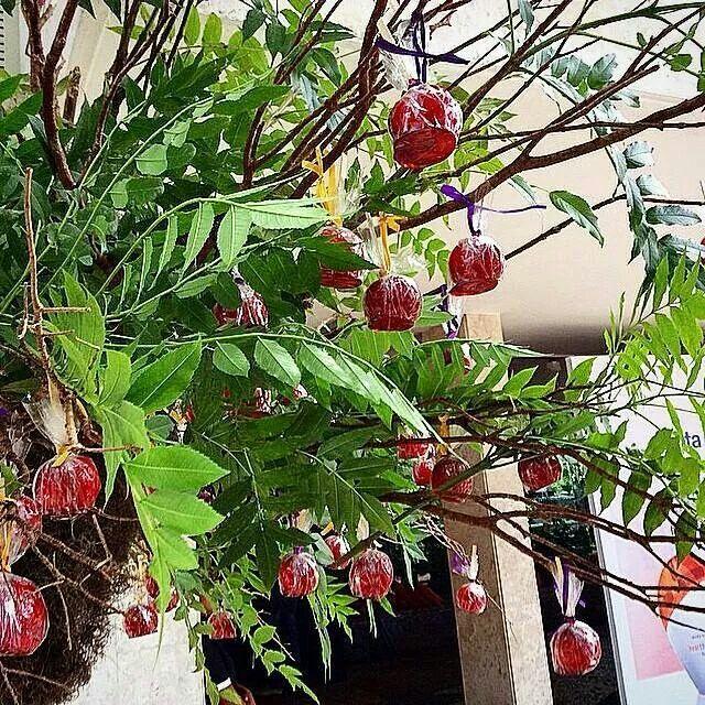 Árvore  de maça do amor