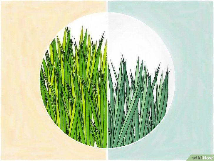 faire pousser facilement une pelouse | Pelouse, Comment ...
