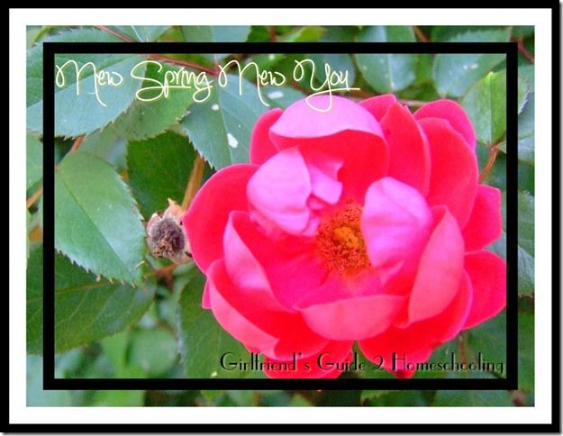 New Spring, New You ~ A fantastic spring devotional #Devotional #Biblestudy