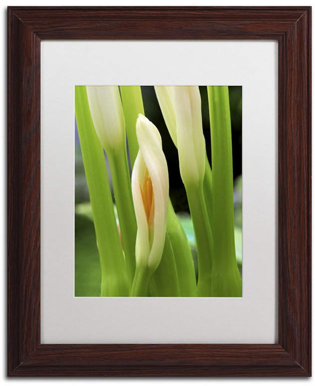 Kurt Shaffer Lily Unfolding Matted Framed Art 11 X 14 Framed Art Canvas Art Frame