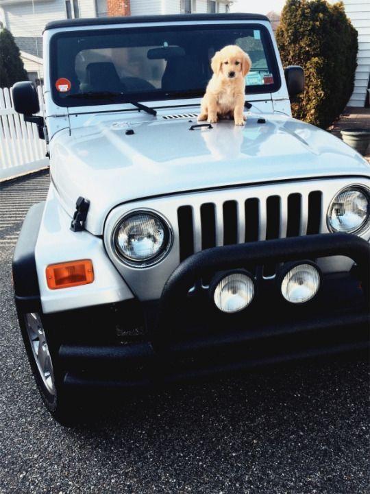 Riityeyayeѕt Sianiii Cute Cars Jeep Old Dogs