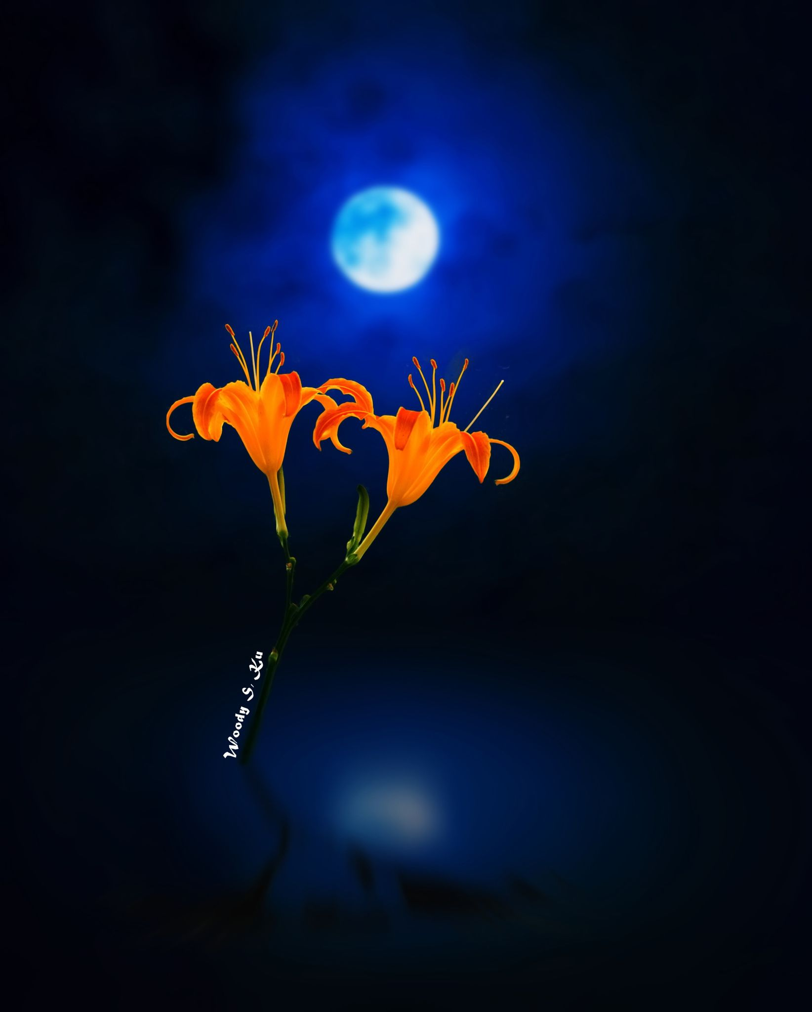 Romantic Yellow Lily Flower Under The Moon Light Gods
