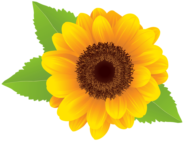 sunflower png clip art image flower designes pinterest art rh pinterest com sunflower clip art borders sunflower clip art free