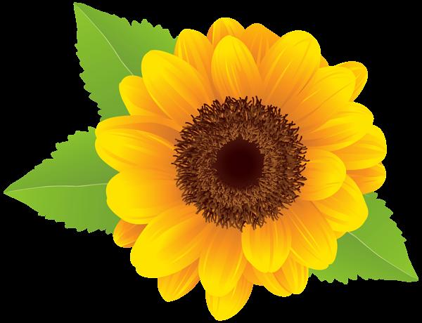 Sunflower PNG Clip Art Image Sunflower png, Sunflower