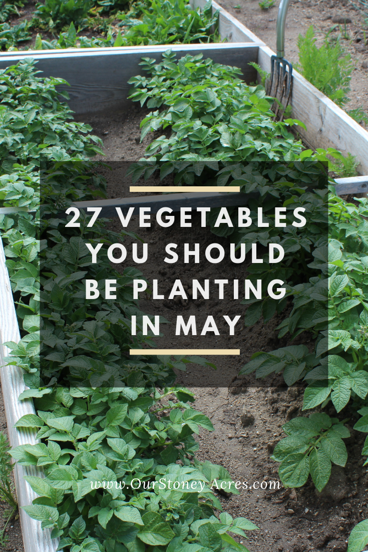 May Planting Guide 27 Crops To Plant This Month Vegetable