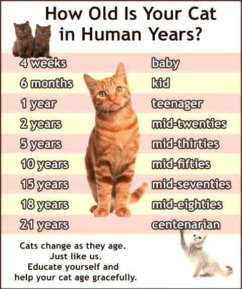 Pin By Sherry Morris On Cats Cat Ages Cat Years Cats