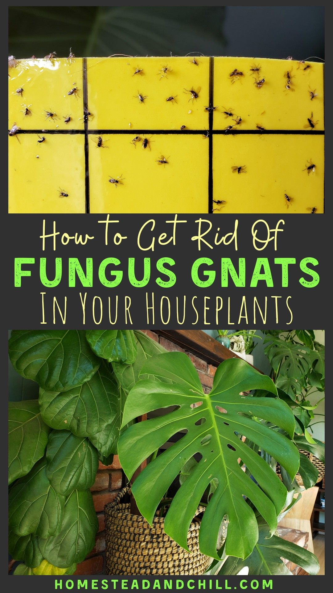 How To Get Rid Of Fungus Gnats In Houseplants, Organically