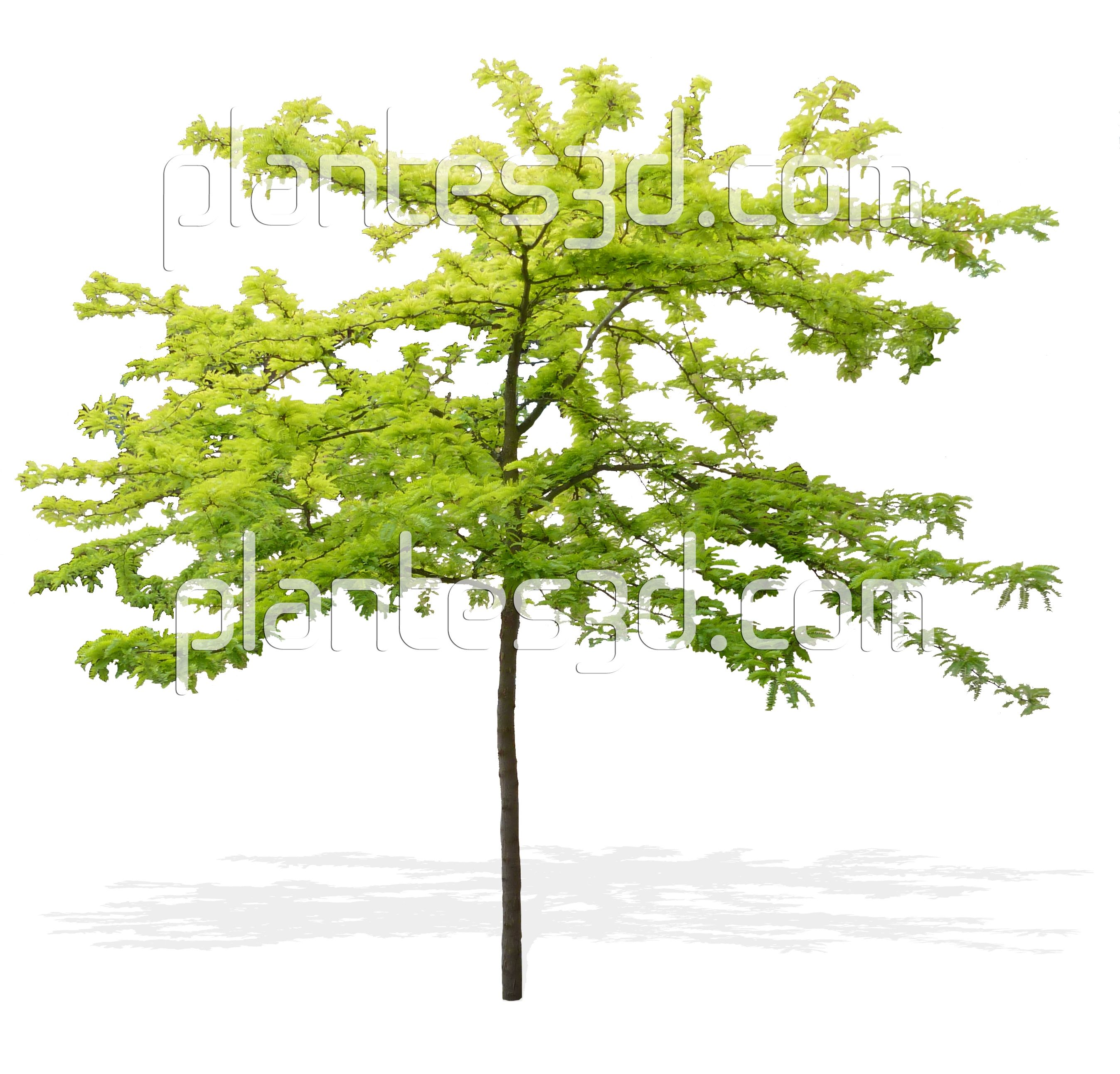 Top view plants 02 2d plant entourage for architecture - Arbre Gratuit Png Free Tree Png Cutout