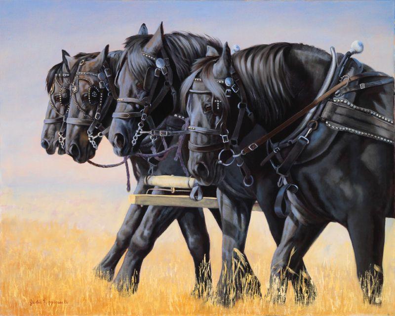 Heavy Horses-Percheron