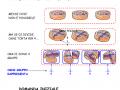 Le Frazioni 1° Ist. Superiore | AiutoDislessia.net
