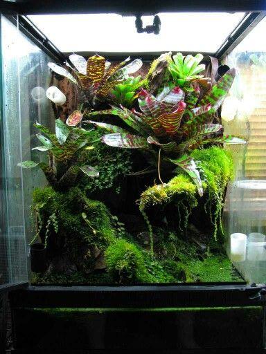Small Viv Scape Idea Vivarium Vivarium Gecko Terrarium Frog