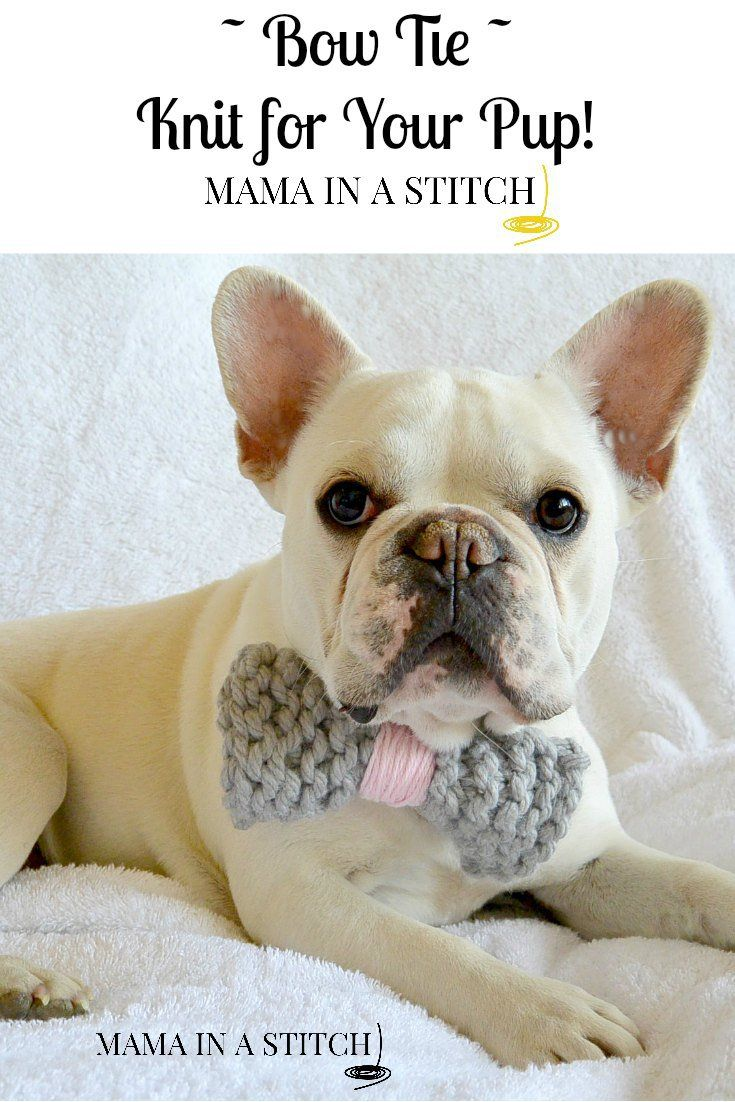 Stash Buster - Knit Bow Tie and Pom-Pom Collar | Super easy, Free ...
