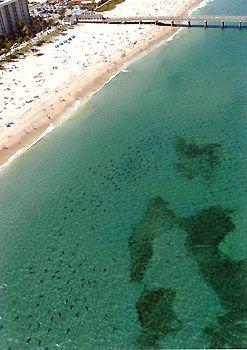 Deerfield Beach Sharks That Is A Lot Of In One Spot