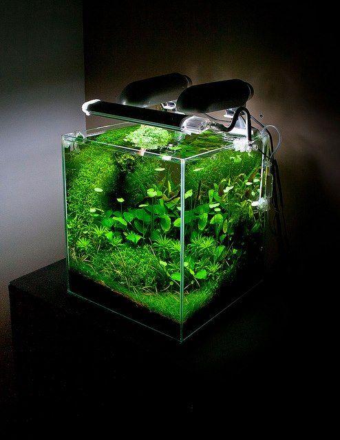 So green beautiful planted nano tank for Plante nano aquarium