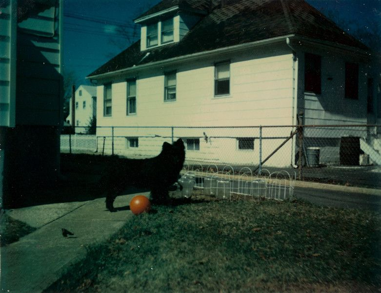 #INALMOSTEVERYPICTURE #BLACKDOG #PHOTOBOOK #PHOTOGRAPHY #ERIKKESSELS #POLAROID #VINTAGE #ANIMAL