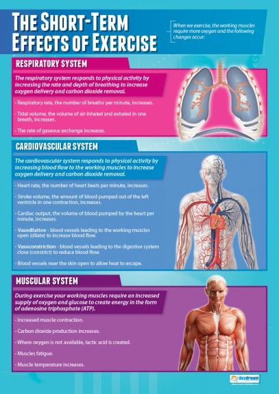 The Short-Term Effects of Exercise Poster | Body Systems | Pinterest ...