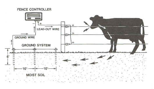 Electric Fence How To Install Chooks Cows N Bees