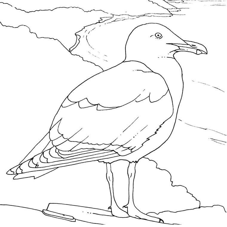 Coloriage Oiseaux De Mer Art A Theme Oiseau Dessin Mer Mouette