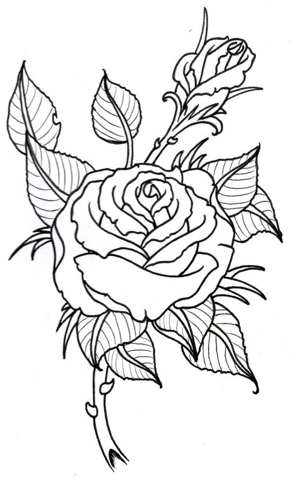 Rose Outline By Vikingtattoo On Deviantart Rose Outline Outline Drawings Flower Outline