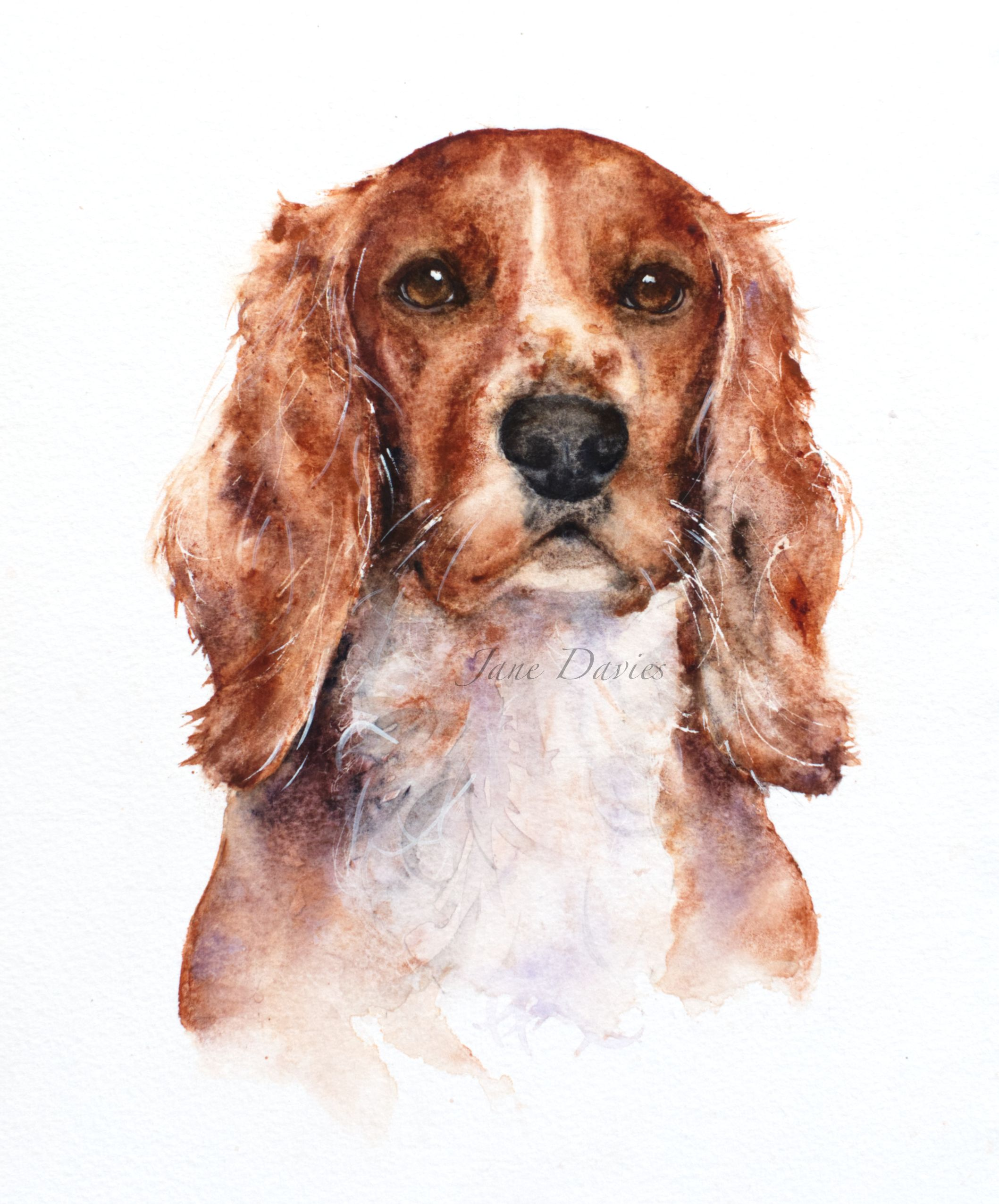 Cocker Spaniel Puppy Art Print Sepia Watercolor Painting by Artist DJR