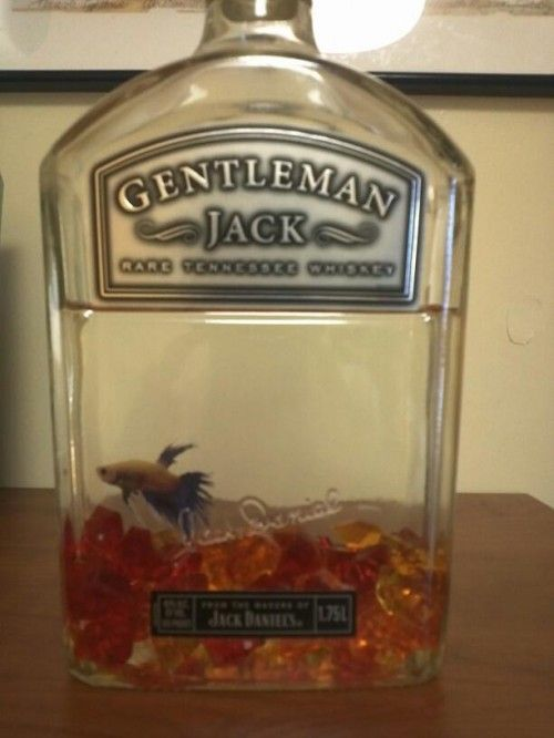 Please Lets Do This To A Fish And Name Him Jack Or